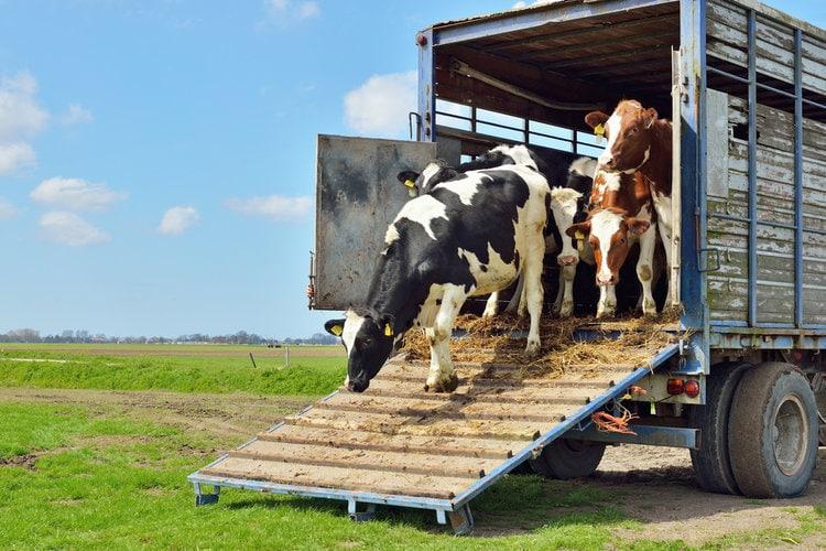Livestock Hauler ELD